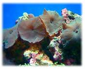 saltwater fish minerals information
