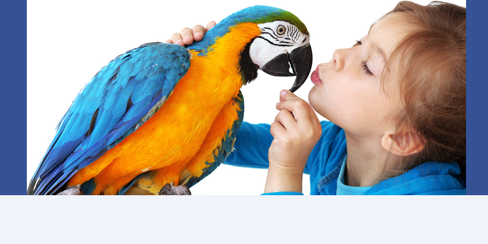 bou kissing blue and green macaw bird