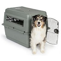 Sky Vari Kennel, Additional Presentation Information Available, Click to View