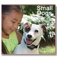 Petsafe beginning dog shock collars for small dogs, Additional Presentation Information Available, Click to View