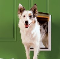 Dog Doors PSPPA0010984, Additional Presentation Information Available, Click to View