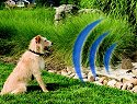Wireless Dog Fences, Additional Presentation Information Available, Click to View