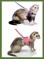 Ferret Leash and Harness