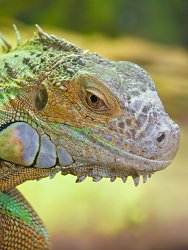 Reptiles Need Proper Wavelengths of Light to digest and metabolize their Calcium Intake & Learn About the Lighting Requirements of Reptiles and Lizards