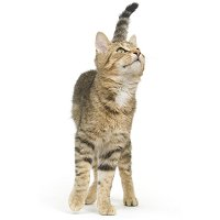Learn about cat marking behavior